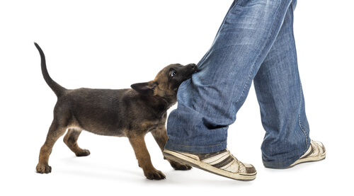 Parkersburg dog bite lawyer Jim Leach will take the time to help you understand the nature of your West Virginia case.